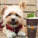 Após ser adotado, cachorrinho vira sensação foodie no Instagram