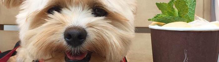 noticia-gourmetice-popeye-cachorro-cachorrinho-caozinho-abandonado-adotado-foodie-foodporn-instapet-instagram