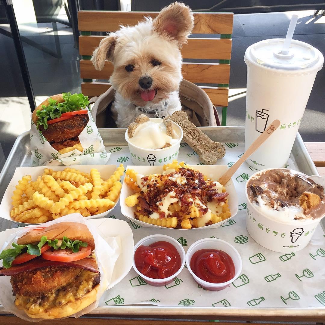 notícia, gourmetice, cachorrinho, cachorro, cãozinho, abandonado, resgatado, adotado, popeye, ivy diep, foodie, instagram, foodporn, instapet